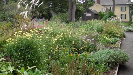 Old Lyme, CT: garden looking back toward house