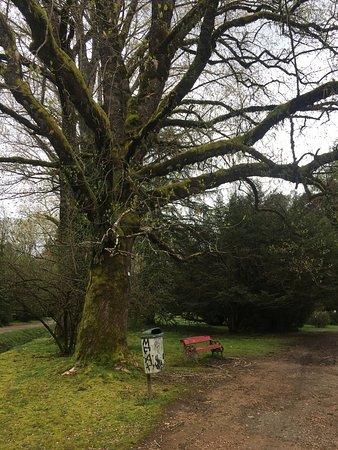 Jardin Botanico de la Universidad Austral de Chile: photo1.jpg