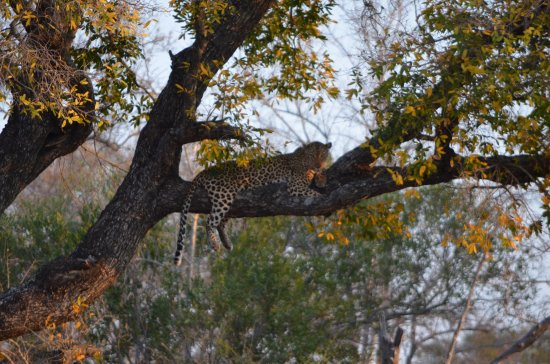Ngala Private Game Reserve, Sydafrika: First Sighting