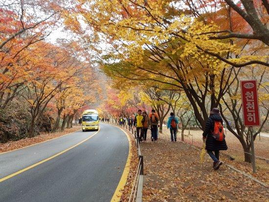 Jeongeup, Corea del Sur: Bus ride on your way up then walk a few minutes down