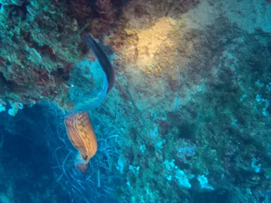 Elba Diving: photo5.jpg