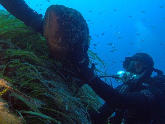 Elba Diving: photo8.jpg