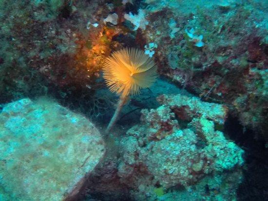 Elba Diving: photo9.jpg