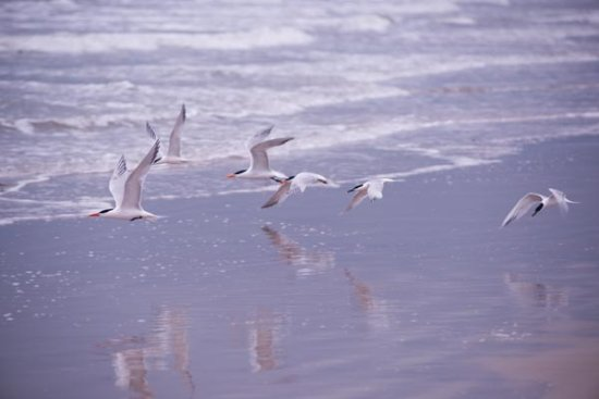 Padre Island National Seashore: There are many types of sea birds to take photos of.