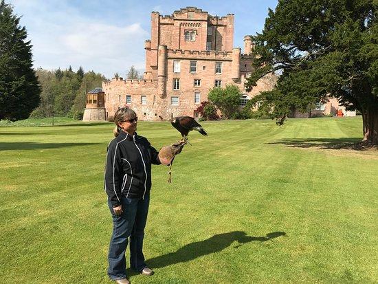Dalhousie Castle Falconry