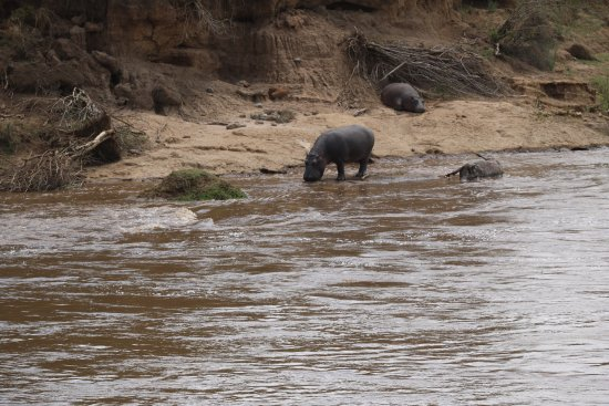 Mara Crossings Camp: photo3.jpg