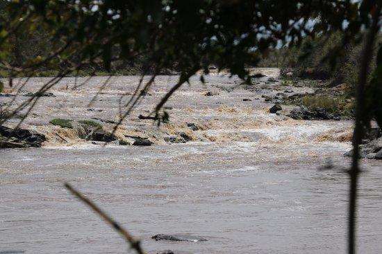 Mara Crossings Camp: photo4.jpg