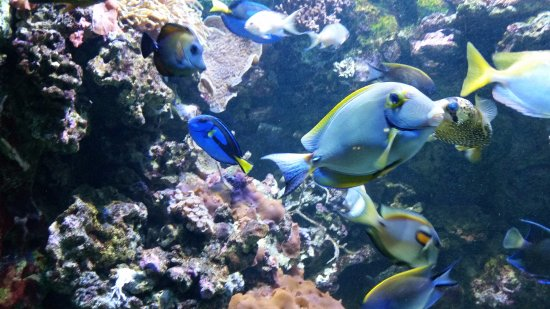 Autres poissons tropicaux picture of aquarium tropical de la porte doree paris tripadvisor - Aquarium tropical de la porte doree ...