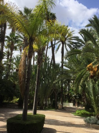 Huerto del Cura - Picture of Palm Groves (Palmeral) of Elche, Elche - TripAdv...