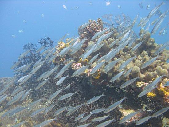Gros Islet Quarter, Sainte-Lucie : Lots of fishies!