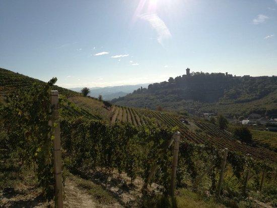 Santa Vittoria d'Alba, Italia: photo4.jpg