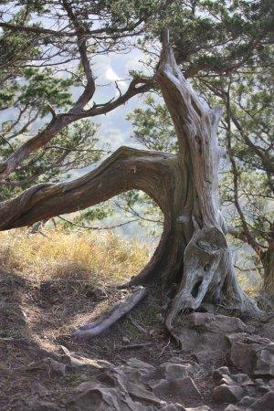 Simsbury, كونيكتيكت: old tree