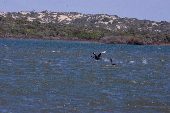 South Australia, Australia: photo1.jpg