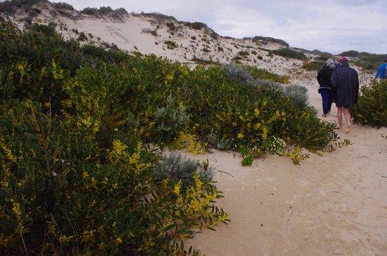 South Australia, Australia: photo5.jpg