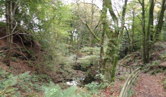 Kilsyth, UK: Colzium Glen