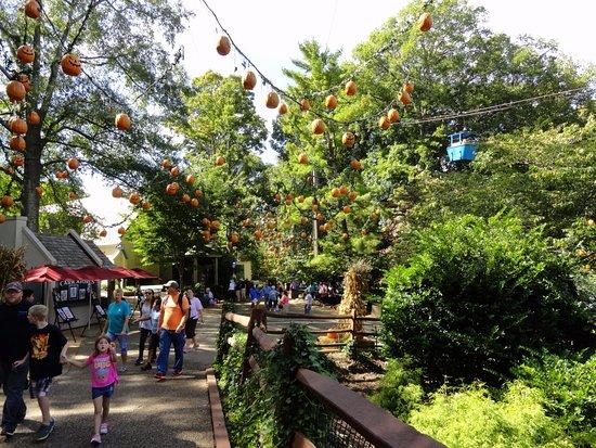 Busch Gardens Williamsburg: Pumpkins And Skyride