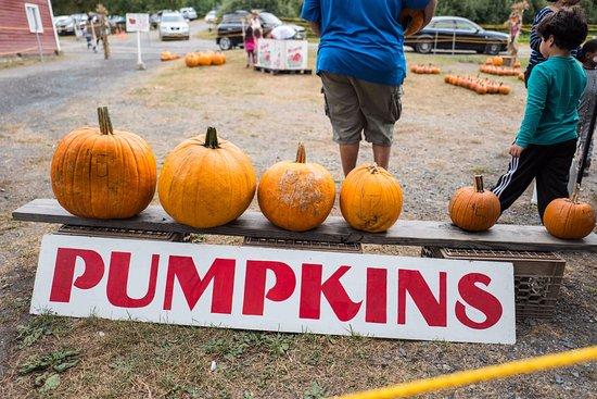 Warwick, NY: Pumpkins