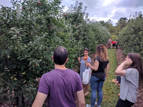 Tyngsboro, MA : Excellent variety of apples, and very tasty too!