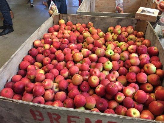Stillwater, MN: Aamodt's Apple Ochard