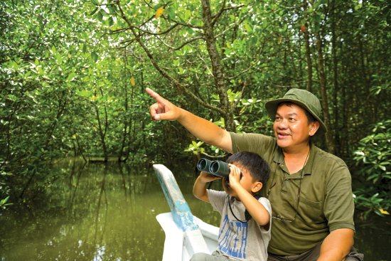 Langkawi District, Malesia: Mangrove Tour at Kilim Geoforest Park