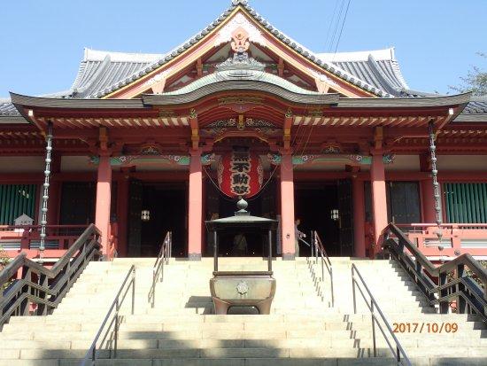 Megurofudoson