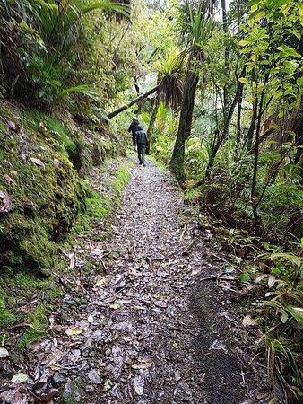 Waiotemarama Loop Track