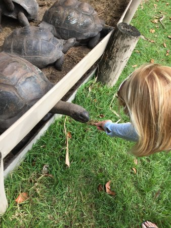 Iles des Palmes: Meeting the giant tortoises