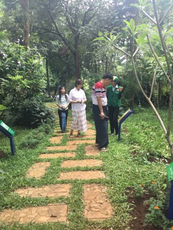 FAME Organic Pharming Project: A Herbal Garden full of variety of medicinal plants