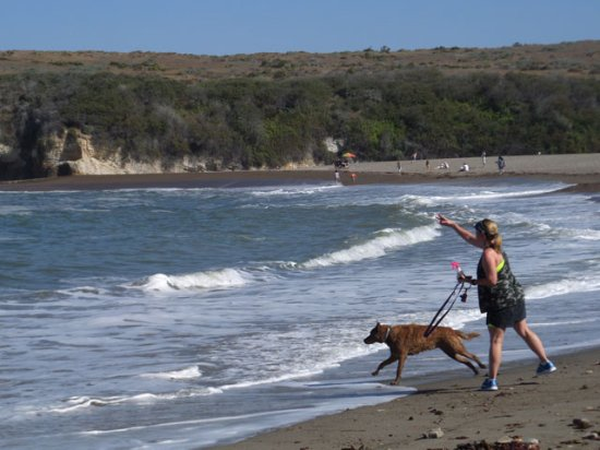 Los Osos, CA: playing fetch with a pet
