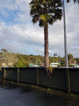 Warkworth, Nova Zelândia: so close to main highway but didnt even hear the traffic