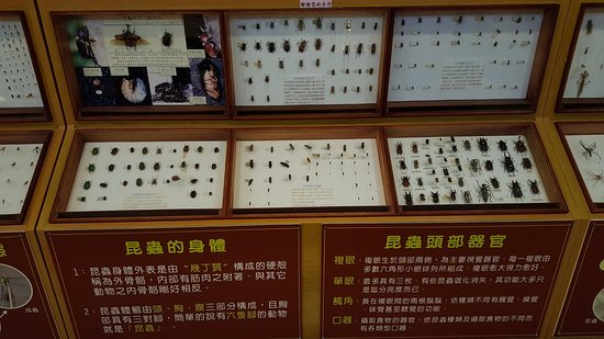 Sun-Link-Sea Hotel: 大廳有蝴蝶標本介紹