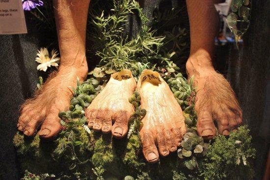 Hairy Feet Hobbit Tour