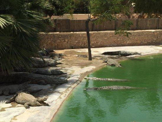 Midoun, Tunisien: Crocodile Farm