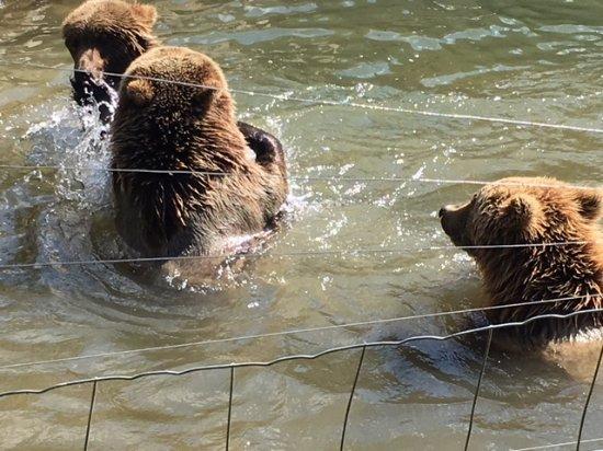 Hermival-les-Vaux, France: Les ours jouent dans l'eau
