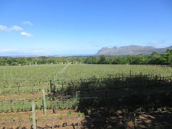 Constantia, África do Sul: Utsikt från huvudingången med vinfälten