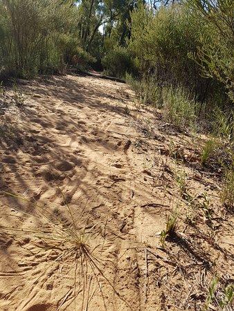 Baradine, Australia: Towards the Dam