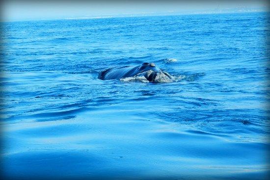 Port Elizabeth, Sudáfrica: Whale