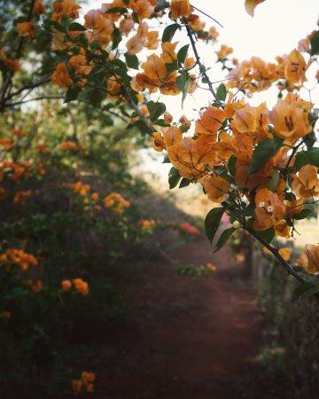 Nova Odessa: flores