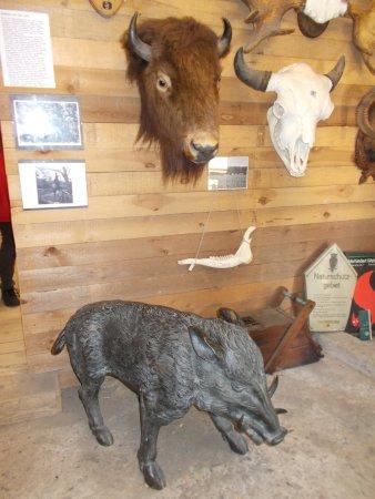 Forst- und Jagdmuseum Ferdinand von Raesfeld