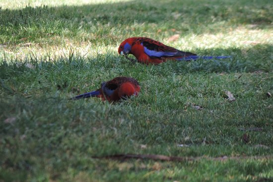 The Blue Mountains Botanic Garden: photo3.jpg