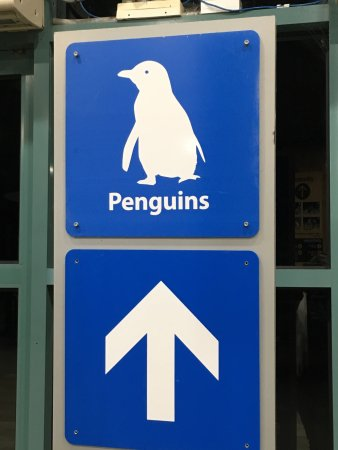 Phillip Island Nature Parks - Penguin Parade: photo2.jpg