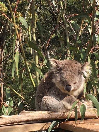 Cowes, Avustralya: photo0.jpg
