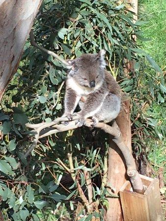 Cowes, Avustralya: photo1.jpg