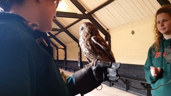 Cullompton, UK: One of the owls at Yarak
