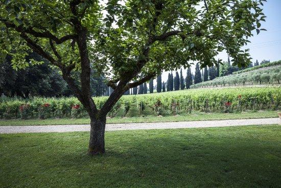 San Pietro in Cariano, Włochy: Vineyard