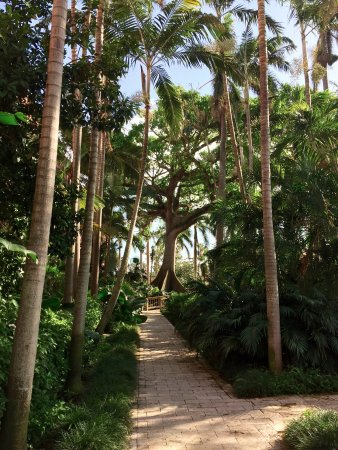 Boca Raton Resort, A Waldorf Astoria Resort: Love this old tree