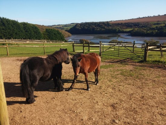 Gweek, UK: Ponys on the hill
