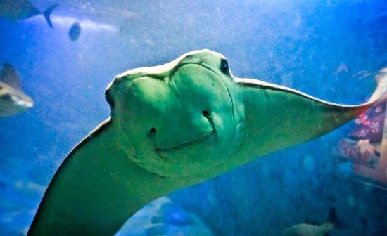 Ubatuba Aquarium
