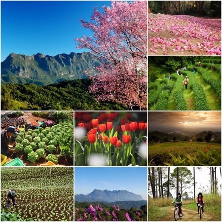 Chiang Rai Province Photo
