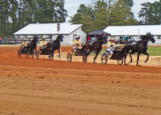 Pinehurst Harness Track: Matinee Races in April